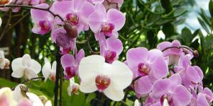 20% auf alle Orchideen!!!!